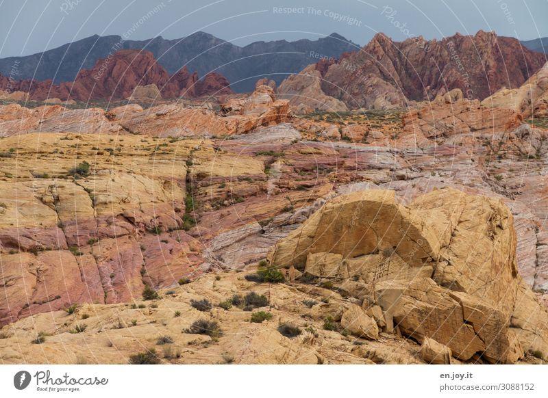 Bunte Sandstein Felsen im Valley of Fire Valley of Fire State Park Nevada Usa Amerika Nordamerika Sandsteinformation Felsformation Erosion Straße Schlucht