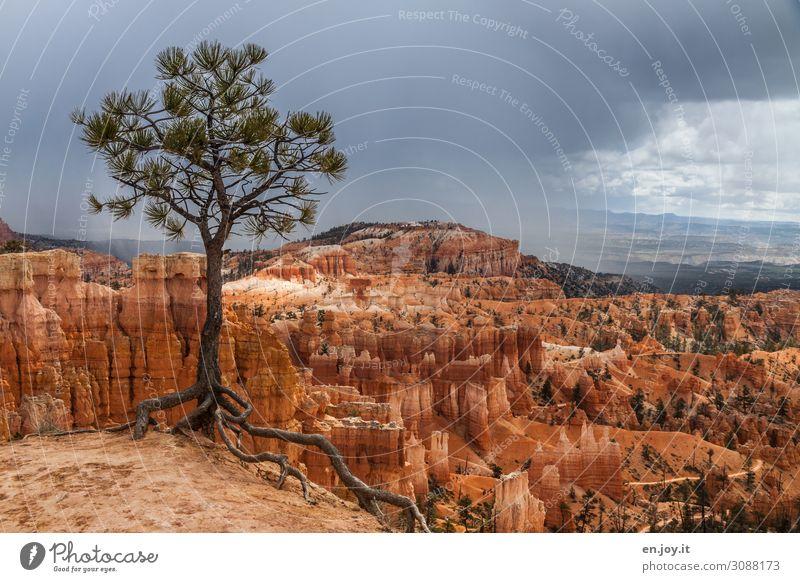 festhalten Ferien & Urlaub & Reisen Natur Landschaft Baum Ferne Tourismus orange Felsen Abenteuer USA Vergänglichkeit Klima Amerika Wüste Verfall Schlucht