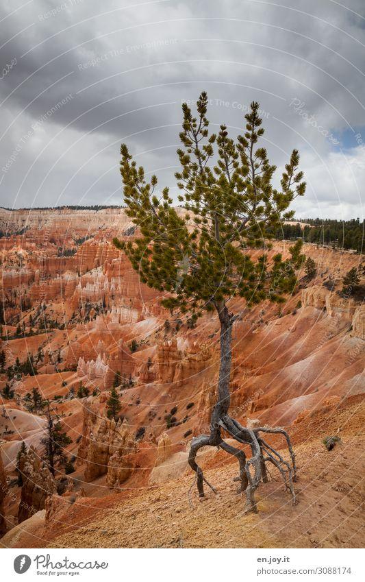 Balletttänzer Ferien & Urlaub & Reisen Natur Landschaft Gewitterwolken Klima Klimawandel Baum Pinie Fichte Nadelbaum Wurzel Felsen Schlucht Wüste Bryce Canyon