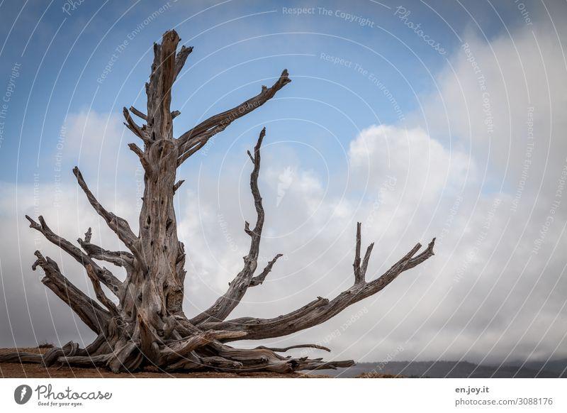 Alt | tote langlebige Grannen-Kiefer vor Himmel mit Wolken Tot Baum Kahl Abgestorben Gestorben Pflanze Bristlecone Bristlecone Pine Langlebig Langlebige Kiefer