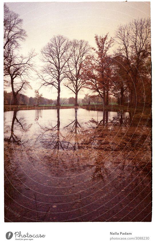 Bäume blattlos Mensch Natur Landschaft Pflanze Baum Blatt Park See Schlossparksee Bochum Deutschland Europa Wasser braun schwarz Herbst kahl Eilen