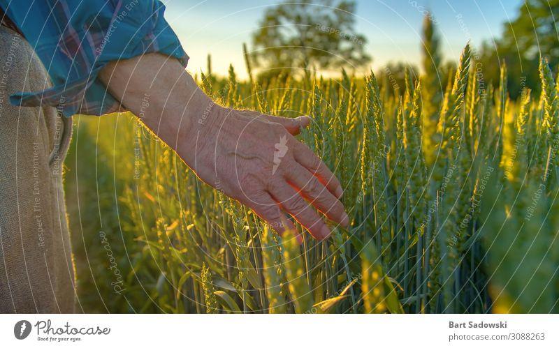 Landwirt prüft Jungpflanzen Getreide Ernährung Lifestyle Gesunde Ernährung Leben Freiheit Sommer Industrie Gastronomie Mann Erwachsene Männlicher Senior Hand 1