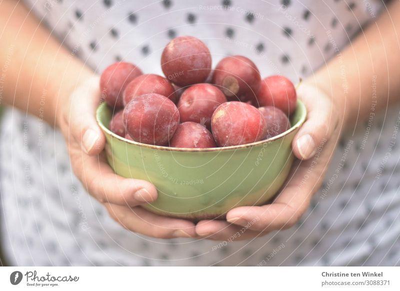 Frauenhände halten eine grüne Schale mit roten Pflaumen Lebensmittel Frucht Ernährung Schalen & Schüsseln feminin Erwachsene Hand Finger 1 Mensch 45-60 Jahre