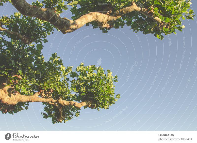 Blicknachoben Freiheit Sommer wandern Umwelt Natur Luft Himmel Wolkenloser Himmel Schönes Wetter Baum Park atmen beobachten Erholung gehen genießen träumen