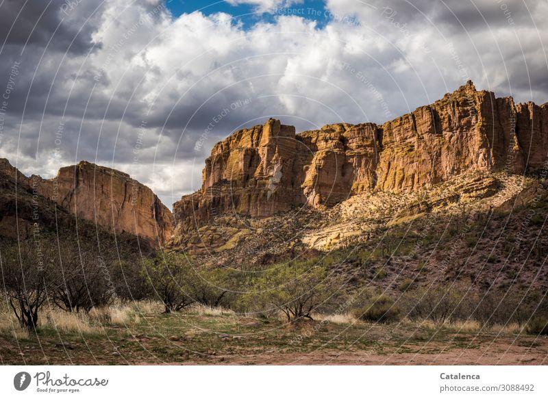 Draußen Ferne Freiheit Berge u. Gebirge wandern Natur Landschaft Pflanze Sand Himmel Wolken Winter Schönes Wetter Baum Gras Sträucher Wildpflanze Kaktus Felsen