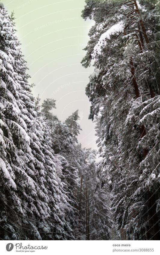 Winterlandschaft Schnee Winterurlaub Natur Baum Wald Erholung träumen gigantisch ruhig Einsamkeit Freizeit & Hobby kalt Umwelt Farbfoto Gedeckte Farben