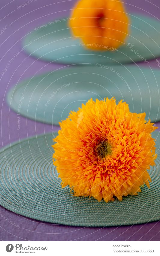 Sonnenblume II harmonisch Erholung ruhig Meditation Häusliches Leben Dekoration & Verzierung Pflanze Blüte träumen frisch Wärme gelb violett orange türkis