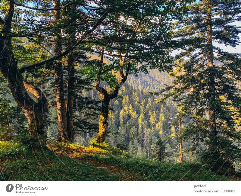 Der Wald wie ein Gemälde Natur Sonnenlicht Sommer Baum Berge u. Gebirge retro schön braun gelb grün ruhig Design einzigartig Frieden Idylle Kunst Stimmung