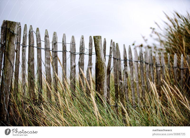 Rosa Granitküste Strand Lifestyle Ferien & Urlaub & Reisen Tourismus Ausflug Ferne Sommer Umwelt Natur Landschaft Sand Gras Sträucher Küste Seeufer Bucht Meer