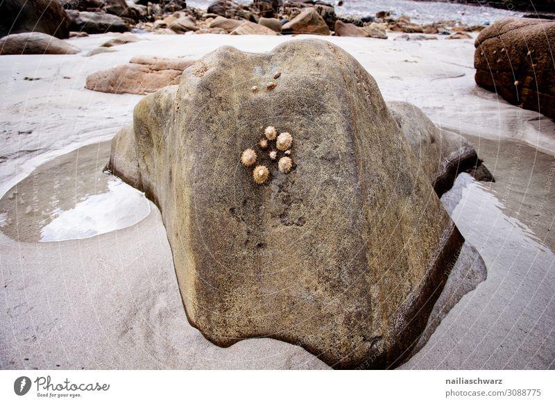 Felsen Lifestyle Ferien & Urlaub & Reisen Tourismus Sommer Strand Umwelt Natur Landschaft Sand Wasser Schönes Wetter Meer Atlantik Rosa Granitküste Frankreich