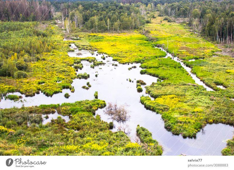 Feuchtgebiet Umwelt Natur Landschaft Pflanze Wasser Grünpflanze Baum Sträucher Wasserpflanze Moor Sumpf Teich Bach Wachstum Umweltschutz Wandel & Veränderung