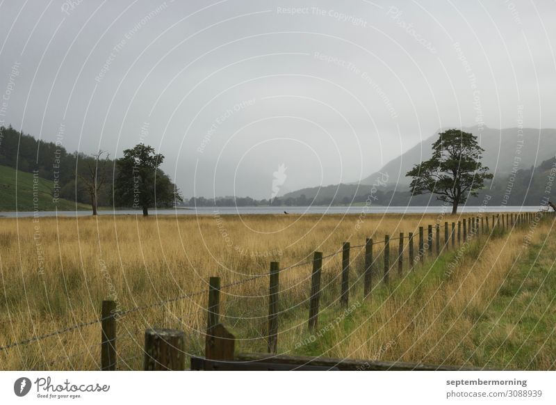 Lake District Landschaft Nebel Baum Feld Berge u. Gebirge See Frieden Natur ruhig Ferne Gedeckte Farben Außenaufnahme Menschenleer Tag Panorama (Aussicht)