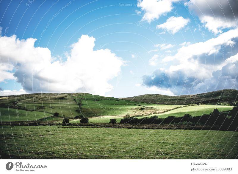 grüne Wiesen Kunst Umwelt Natur Landschaft Himmel Wolken Sonne Sommer Herbst Klima Klimawandel Wetter Schönes Wetter Pflanze Baum Gras Hügel außergewöhnlich