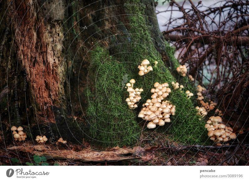 hinterhalt Natur Urelemente Erde Herbst Baum Sträucher Moos Wald Zusammensein listig Pilz Existenz mehrere viele Hinterhalt Szene dramatisch Zweige u. Äste