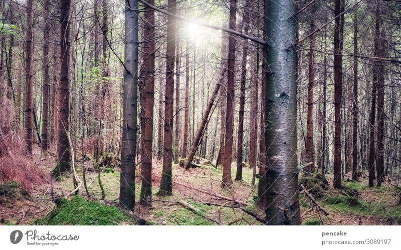 wertvoll   unser wald Natur Landschaft Urelemente Sonne Sonnenlicht Schönes Wetter Baum Moos Wald ästhetisch authentisch Duft Gesundheit gut nachhaltig schön