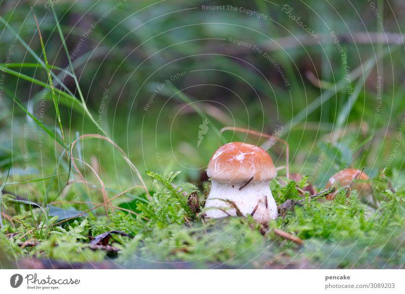 hello again! Natur Pflanze Wald Lebensmittel Herbst Gras frisch Erde Urelemente Pilz Moos Steinpilze