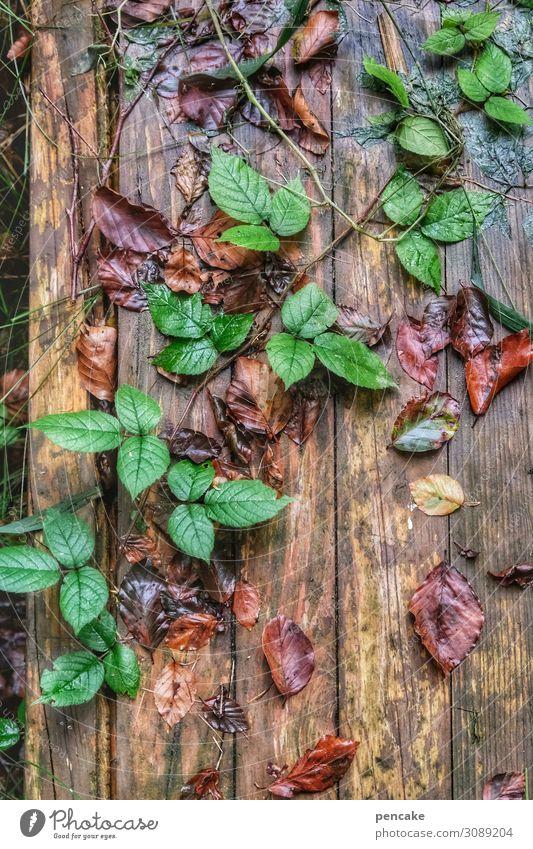 diagonale Natur Herbst Pflanze Wald Wachstum wandern grün Herbstlaub Steg nass Dekoration & Verzierung Ranke Farbfoto Außenaufnahme Nahaufnahme Muster