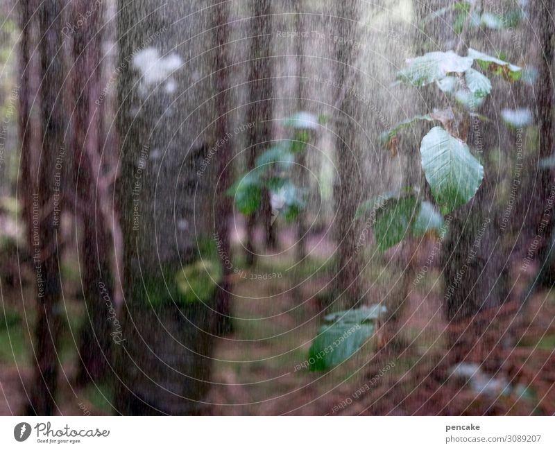regenwald Natur Landschaft Urelemente Wasser Wassertropfen Herbst Regen Baum Blatt Wald authentisch kalt Regenwasser Buche Ast Allgäu Wohltat Farbfoto