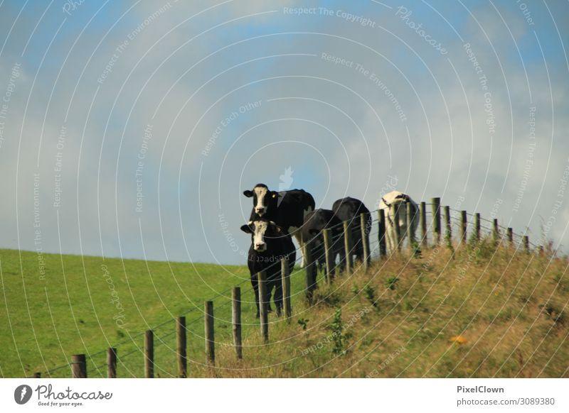 Der Zug der Kühe Freude Ferien & Urlaub & Reisen Tourismus Ferne Sommer Umwelt Landschaft Gras Wiese Alpen Tier Nutztier Kuh Tiergruppe wandern verrückt