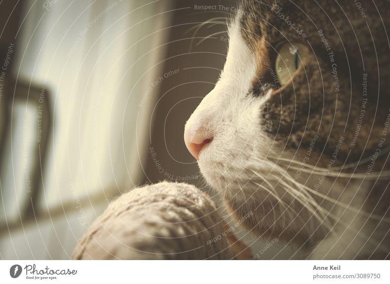 Kater im Profil Katze Tier Liebe Warmherzigkeit Haustier Vertrauen Vorfreude Tiergesicht geduldig achtsam Tierliebe Opferbereitschaft