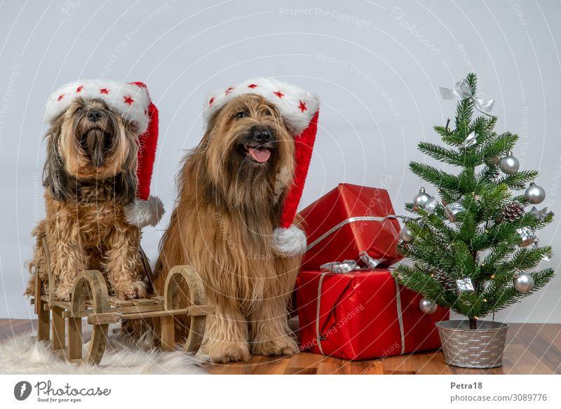 Hunde-Kläuse Haustier 2 Tier sitzen authentisch frech Freundlichkeit Fröhlichkeit braun grün rot Gefühle Vorfreude Kultur nachhaltig Sankt Nikolaus