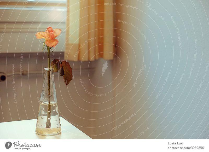 Nostalgie, orange Häusliches Leben Wohnung Dekoration & Verzierung Raum Herbst Blume Blüte Stimmung Vase Rose Vorhang Gardine Gedeckte Farben Innenaufnahme
