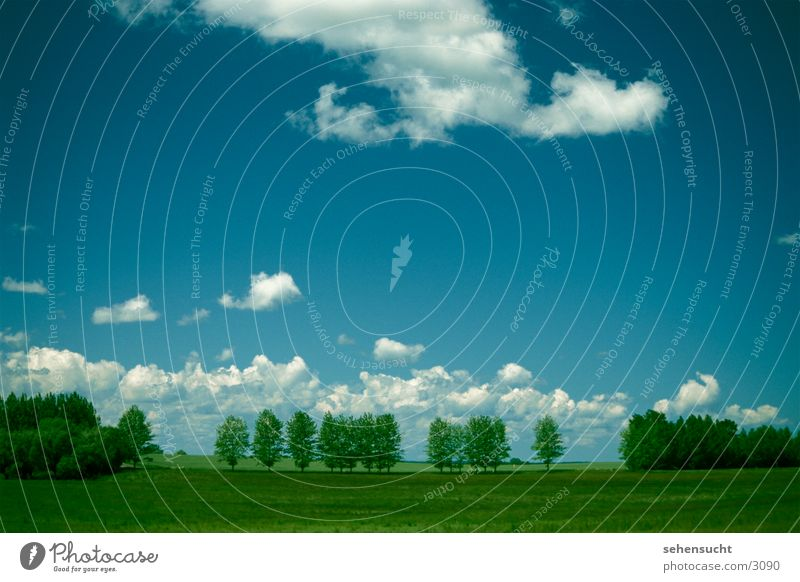 horizont02 Baum grün blau Wolken Wiese Landschaft Erde Mecklenburg-Vorpommern