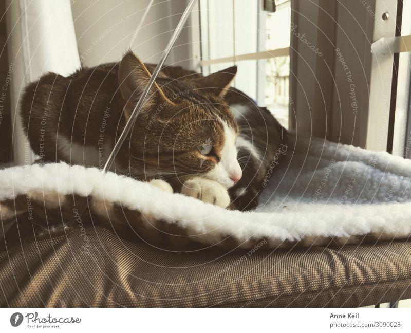 Katze Tier ruhig Liebe Zufriedenheit Lebensfreude Warmherzigkeit weich Schutz Haustier Vertrauen Fell Müdigkeit Tiergesicht Pfote kuschlig