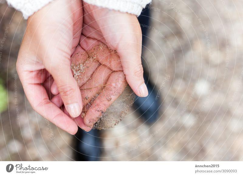 fast unsichtbares Blatt Herbst ansammeln finden halten schützen Natur Kunstwerk zart Hand hell Frau Außenaufnahme rechts frei Wald