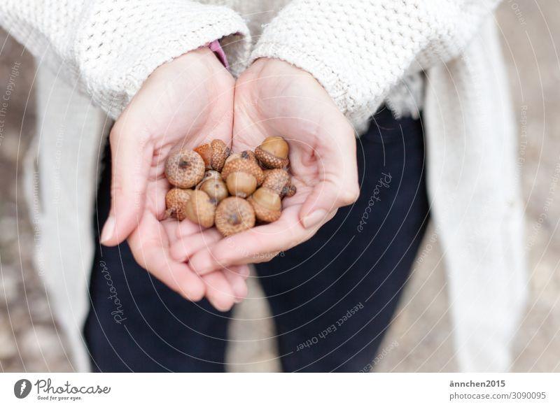 Eicheln Frucht Herbst ansammeln halten Hand Natur Außenaufnahme hell festhalten schützen braun Hut Basteln