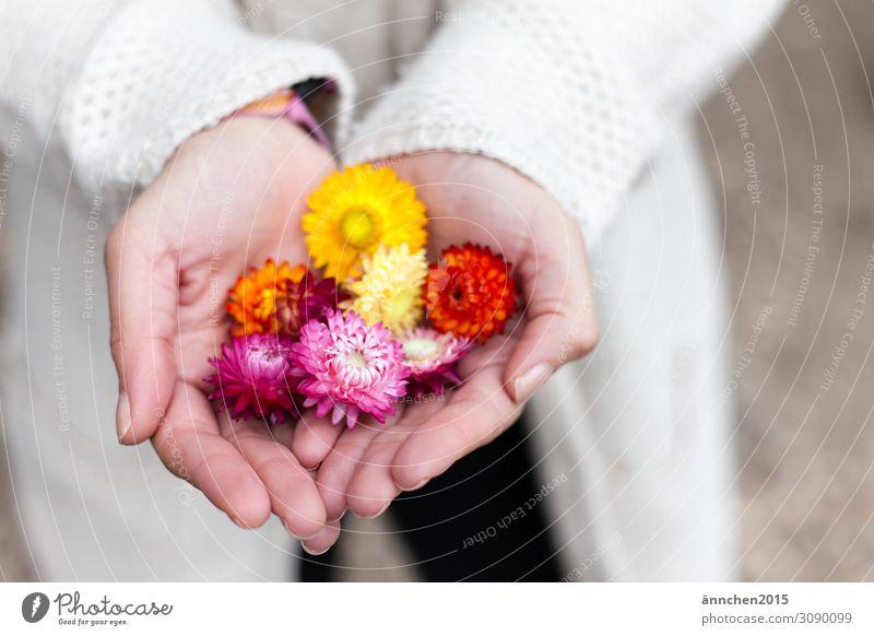 Trockenblumen Sommer Herbst Jahreszeiten Blume mehrfarbig pflücken halten Hand hell Außenaufnahme Natur Pflanze Blüte gelb orange rosa Frau