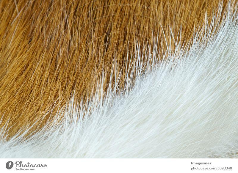 """Zweigeteilt - Tierfell Hintergrund Fell rothaarig weißhaarig Totes Tier 1 Echtfell authentisch exotisch kuschlig Tierliebe verschwenden Rettung """"abstrakt"""