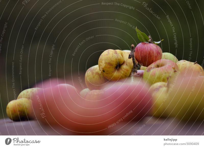 spätlese Lebensmittel Frucht Apfel Ernährung Bioprodukte Garten Umwelt Natur Herbst Pflanze Baum frisch Gesundheit Vitamin Ernte Erntedankfest ertrag Erfolg