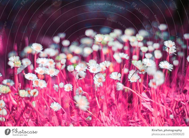 Surrealistische Neonfarbe in abstraktem Stil auf violettem Hintergrund schön Sommer Dekoration & Verzierung Tapete Kunst Natur Pflanze Mode hell trendy lustig