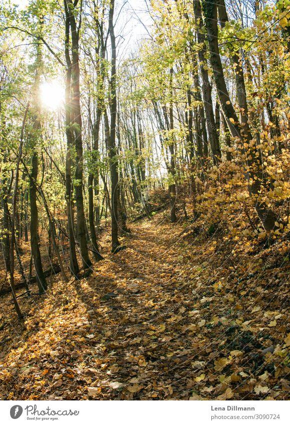 Pfälzerwald Anweiler anweiler triefels Natur Außenaufnahme Wald Farbfoto Baum Pflanze Menschenleer Landschaft Ausflug Licht Tag wandern natürlich