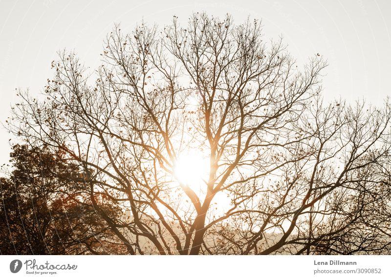 Herbst Baum im Sonnenuntergang Natur Abend Licht Gegenlicht Landschaft Menschenleer Außenaufnahme Sonnenlicht Sonnenstrahlen Farbfoto Schönes Wetter stuttgart