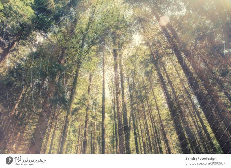 Looking up into the trees Freizeit & Hobby Ferien & Urlaub & Reisen Ausflug Sommer wandern Natur Pflanze Park beobachten Erholung laufen träumen Duft groß