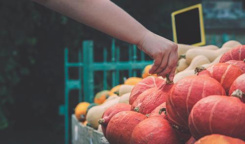 Kürbismarkt. Frau, die von Hand einen Kürbis auswählt. Lebensmittel Gemüse Ernährung Vegetarische Ernährung kaufen Erntedankfest Halloween Gastronomie Herbst