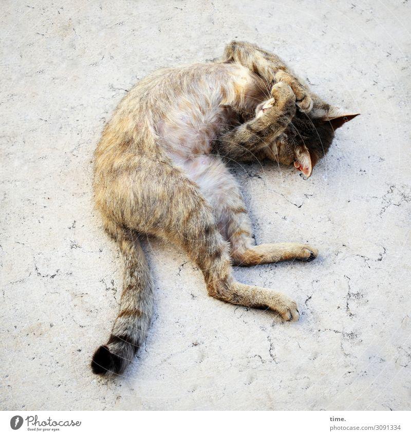 nach dem Schlaf ist vor dem Schlaf Italien Platz Marmor Haustier Katze 1 Tier Bewegung drehen liegen schlafen träumen Glück schön Stadt Wärme Leidenschaft