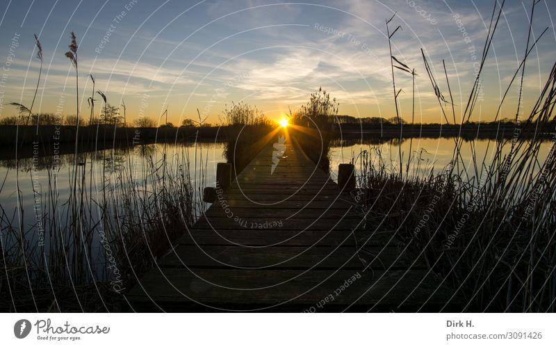 Sundowner Natur Landschaft Wasser Himmel Sonne Sonnenaufgang Sonnenuntergang Sonnenlicht Frühling Küste Seeufer Flussufer Ostsee Moor Sumpf Teich beobachten
