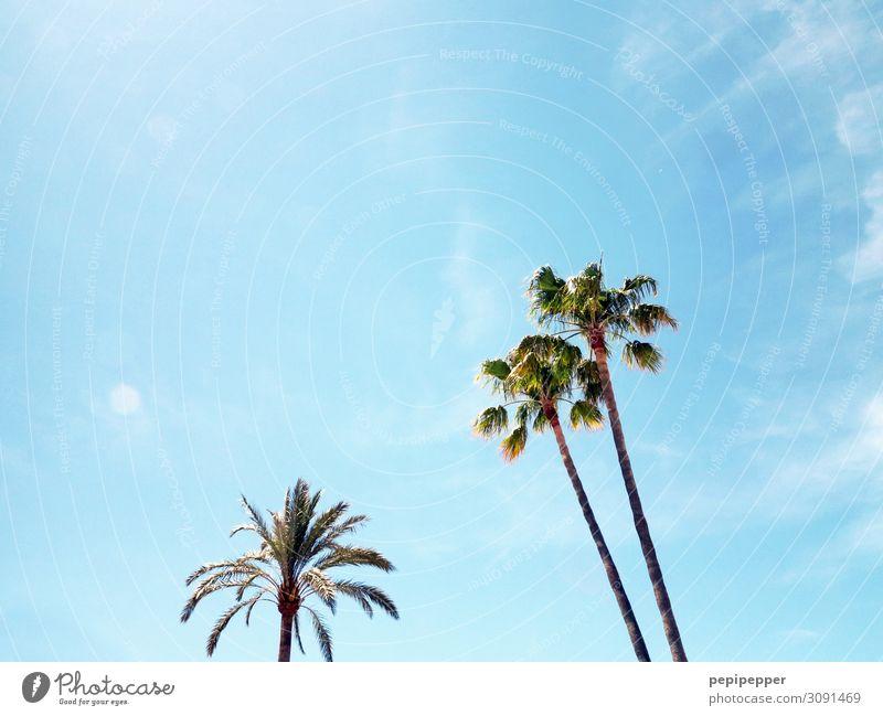Palmen Ferien & Urlaub & Reisen Tourismus Ausflug Ferne Sommer Sommerurlaub Pflanze Himmel Baum blau Farbfoto Außenaufnahme Menschenleer
