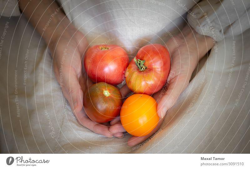 Eine Bäuerin hält vier rote und saftige Tomaten in der Hand. Gemüse Frucht Ernährung Vegetarische Ernährung Diät Sommer Garten Küche Gartenarbeit Frau
