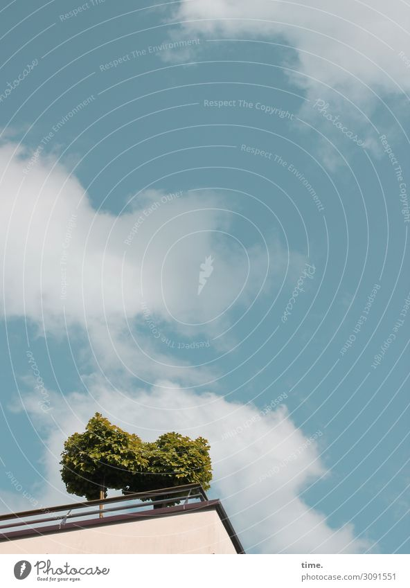 Stadtgrün Himmel Pflanze Baum Haus Wolken Leben Zeit frei frisch Hochhaus Wachstum ästhetisch Fröhlichkeit Kreativität Lebensfreude