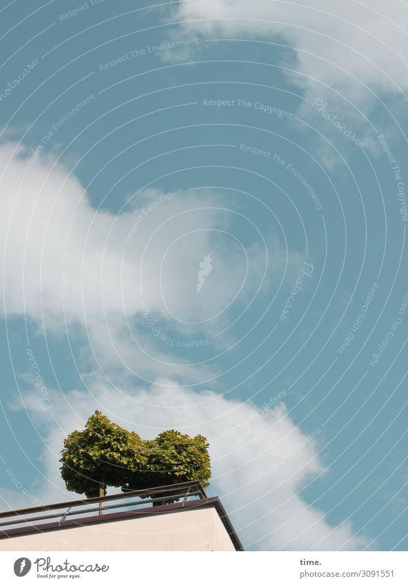 Stadtgrün Himmel Wolken Schönes Wetter Pflanze Baum Haus Hochhaus Dach Wachstum frei Freundlichkeit Fröhlichkeit frisch Lebensfreude Vertrauen geduldig