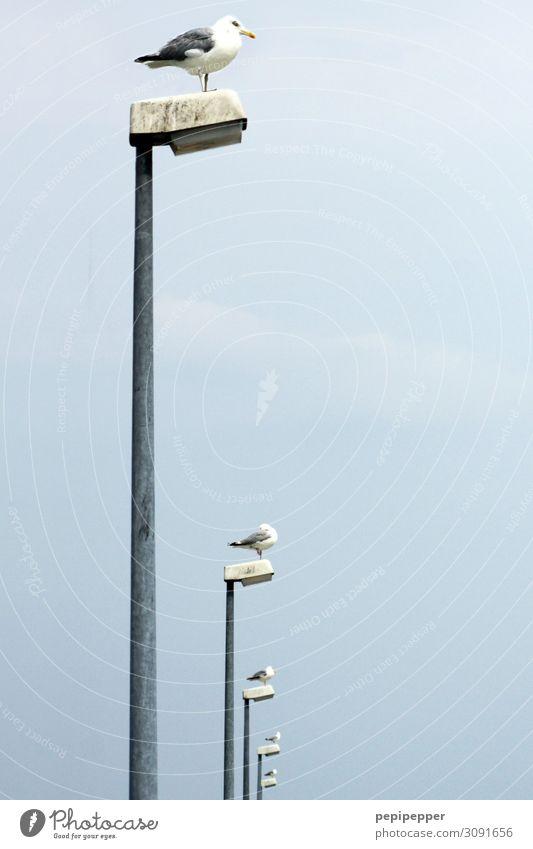 Leuchttürme Ferien & Urlaub & Reisen Himmel Sommer Küste Tier Vogel Taube 4 Laterne hocken blau Zusammenhalt Farbfoto Außenaufnahme Menschenleer Tag