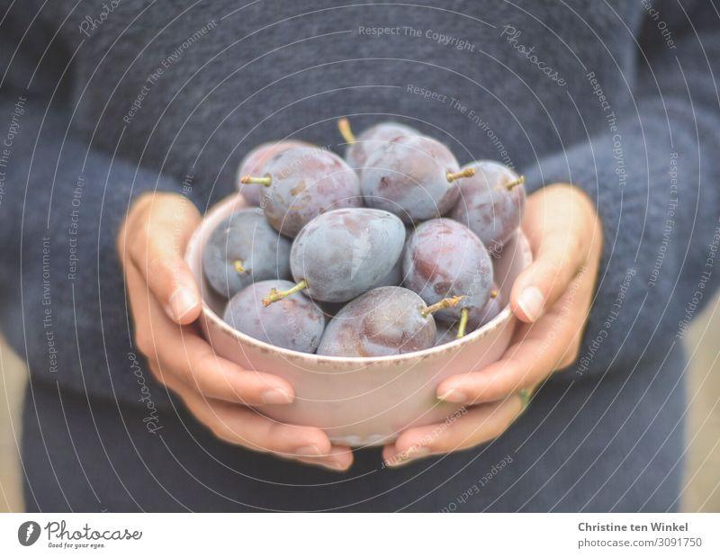 Frische Zwetschgen Frucht Pflaume Ernährung Bioprodukte Schalen & Schüsseln Junge Frau Jugendliche Hand Finger 1 Mensch 18-30 Jahre Erwachsene festhalten