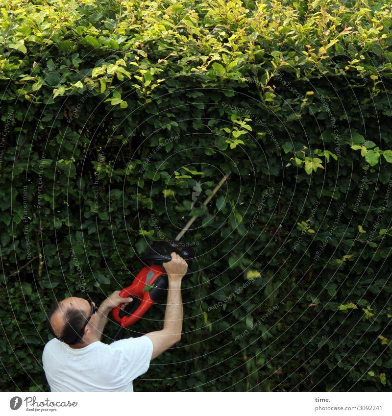Vorsicht, scharf! Arbeit & Erwerbstätigkeit Handwerker Gartenarbeit Arbeitsplatz maskulin Mann Erwachsene 1 Mensch Umwelt Natur Sommer Schönes Wetter Hecke
