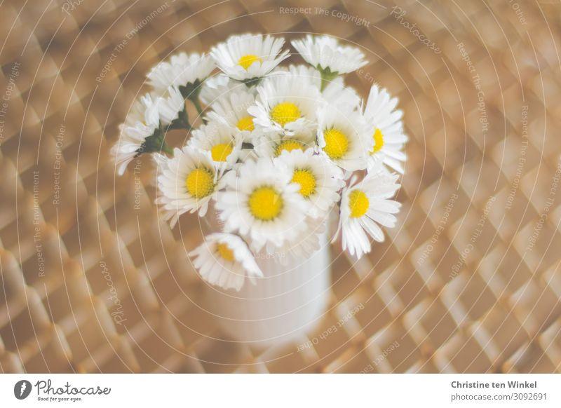 Ein kleiner Strauss Gänseblümchen in einer weißen Vase Natur Pflanze Blume Blüte Freundlichkeit Fröhlichkeit nah modern natürlich niedlich schön braun gelb