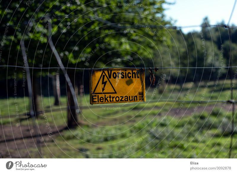Vorsicht Elektrozaun Zeichen Schriftzeichen Hinweisschild Warnschild bedrohlich Sicherheit Warnung gelb Elektrizität Wildpark Wildtier Natur Baum Zaun