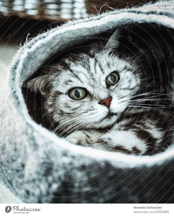 Was guckst du ich will schlafen Tier Haustier Katze 1 Filzkorb Pause Wellness Gedeckte Farben Blick nach vorn